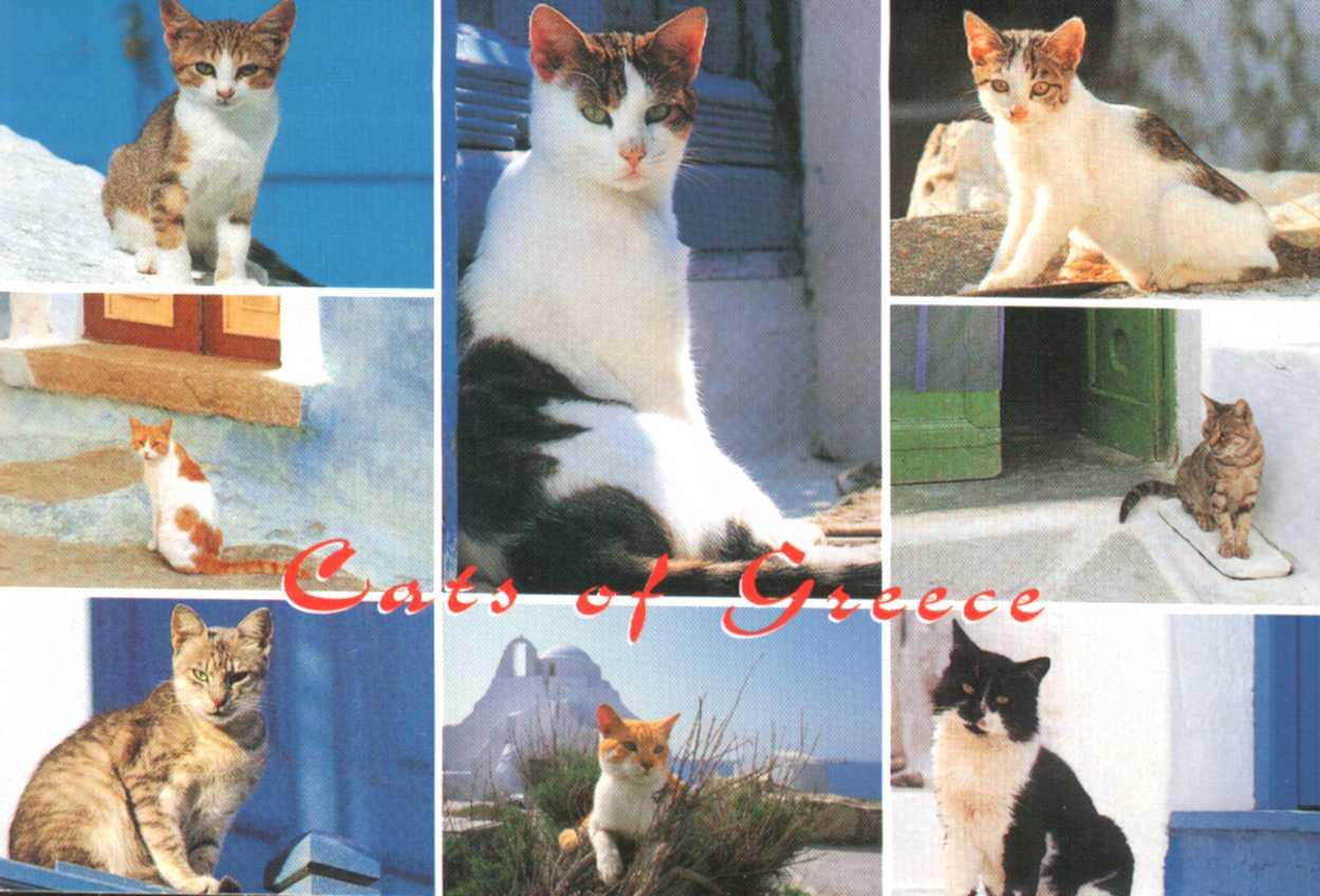 Les chats en Grèce