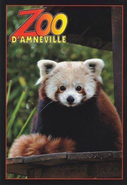Panda roux - Coloriage magique panda roux ...